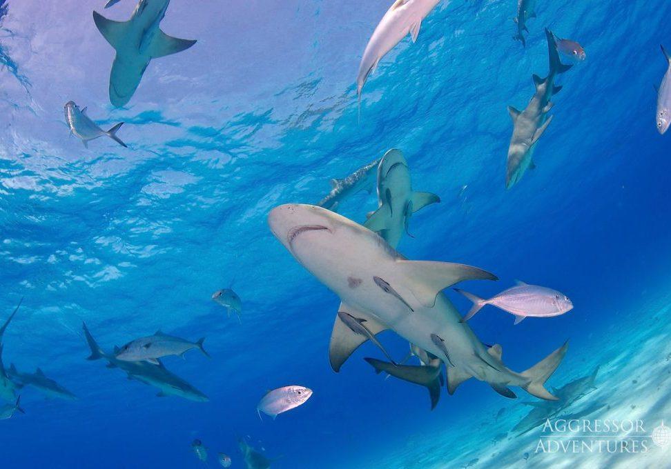 Bahamas Dive Trip