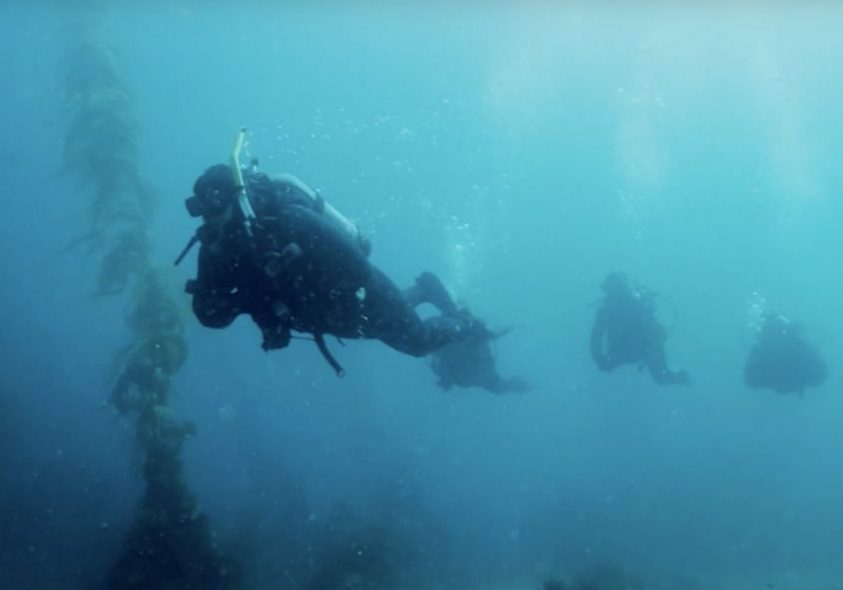 Open Water Dive 2